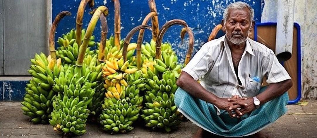 https://secretparadise.mv/wp-content/uploads/2015/10/Banana31-e1447704655203.jpg