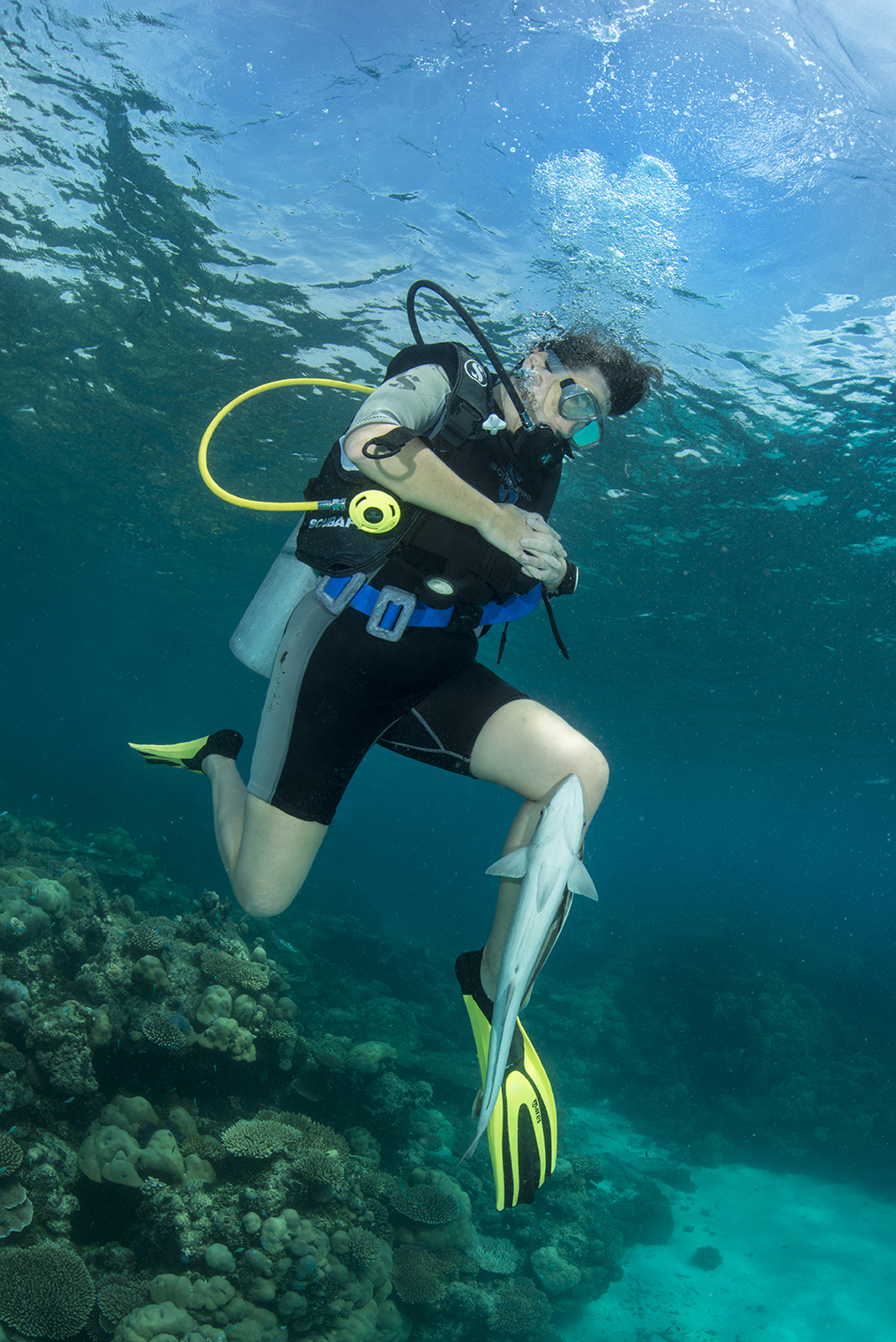 Secret Paradise Co Founder Ruth Franklin dives with a friendly remora
