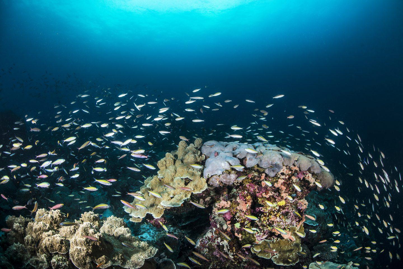 Vibrant coral reef Laamu Atoll Maldives