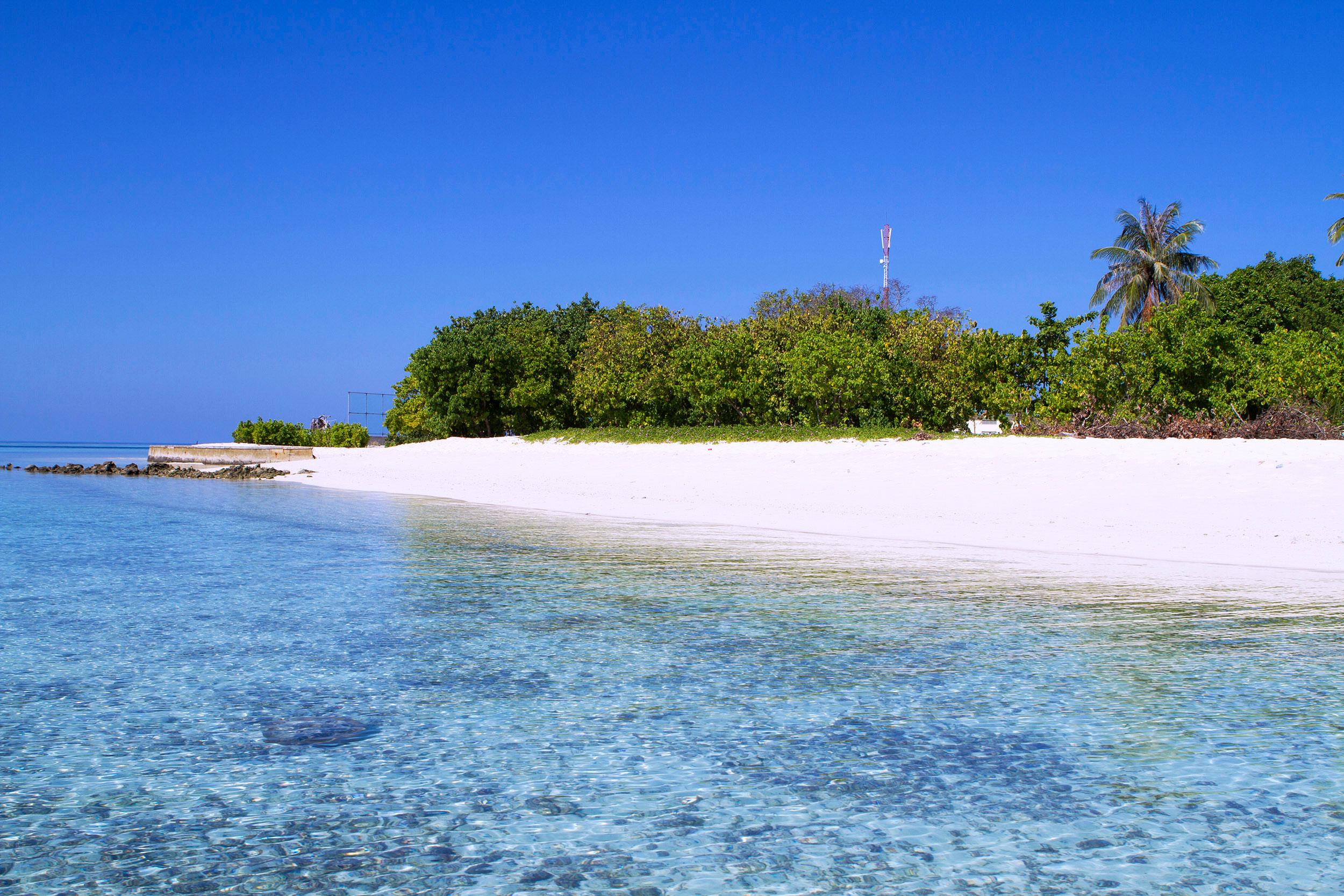 43-Tropic-Tree-Maldives-03-Gulhi