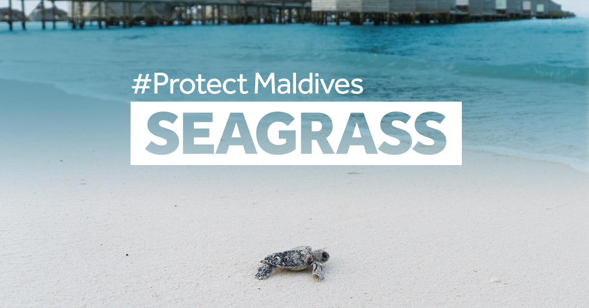 Photo Asset_Baby Green Sea Turtle5FACEBOOK