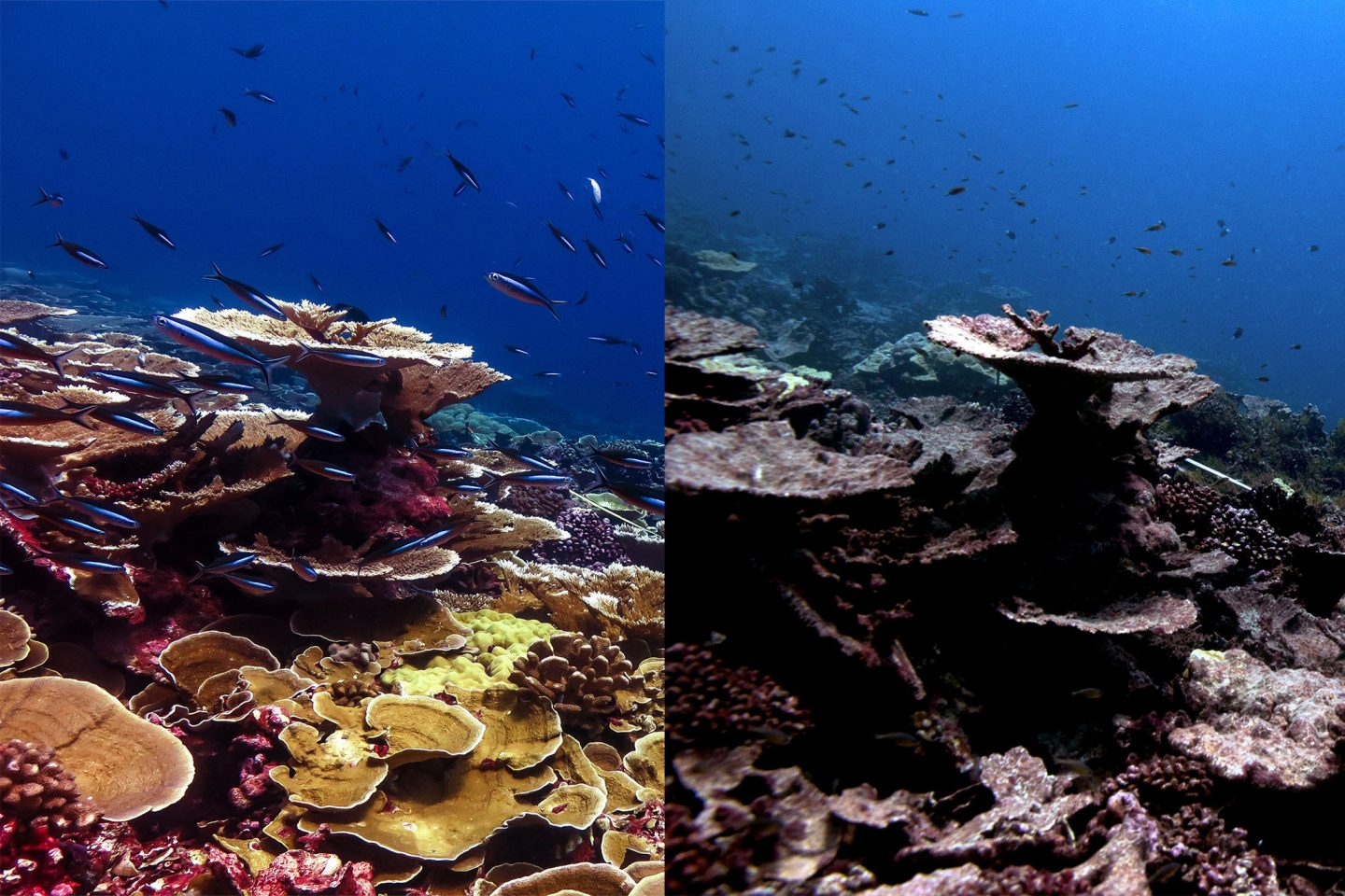 coral reef before and after