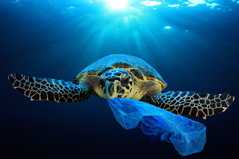 Plastic pollution in ocean environmental problem. Turtles can ea